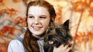 Dorothy's Dog TOTO from THE WIZARD OF OZ Is Taking Center Stage In A New Animated Movie Musical